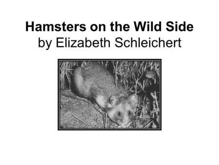 Hamsters on the Wild Side by Elizabeth Schleichert.