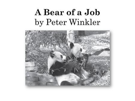 A Bear of a Job by Peter Winkler. 1 How are wild pandas and zoo pandas different? Ο A. Wild pandas learn to walk; zoo pandas can sit up straight. Ο B.