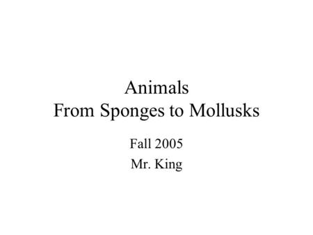Animals From Sponges to Mollusks Fall 2005 Mr. King.