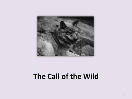 The Call of the Wild 1. 7 What is the meaning of the word exterminated in paragraph 1 of the selection? o A. Threatened o B. Eliminated o C. Relocated.