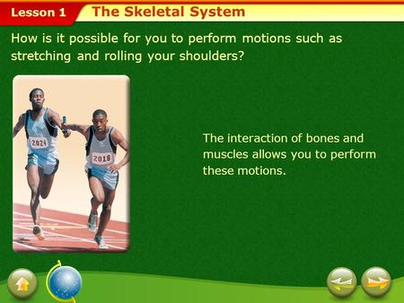 The Skeletal System How is it possible for you to perform motions such as stretching and rolling your shoulders? The interaction of bones and muscles allows.