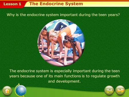 Lesson 1 Why is the endocrine system important during the teen years? The endocrine system is especially important during the teen years because one of.