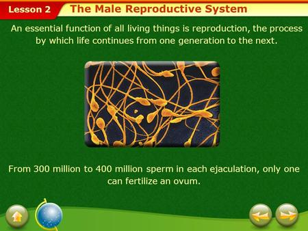 Lesson 2 An essential function of all living things is reproduction, the process by which life continues from one generation to the next. From 300 million.