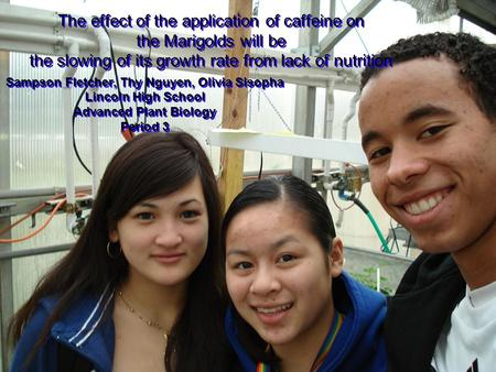 The effect of the application of caffeine on the Marigolds will be the slowing of its growth rate from lack of nutrition Sampson Fletcher, Thy Nguyen,
