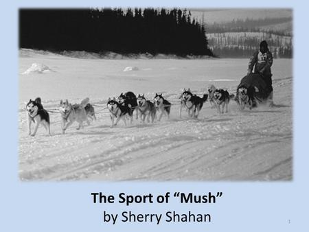 "The Sport of ""Mush"" by Sherry Shahan"