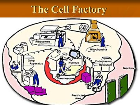 The Cell Factory. ORGANELLE is a specific structure of a cell having specialized functions. is a specific structure of a cell having specialized functions.cell.