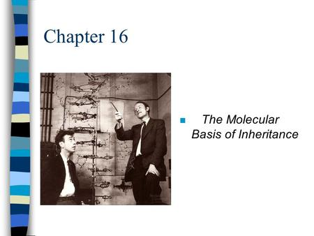 Chapter 16 n The Molecular Basis of Inheritance. Searching for Genetic Material I n Mendel: modes of heredity in pea plants n Morgan: genes located on.