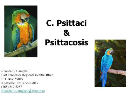 C. Psittaci & Psittacosis Rhonda C. Campbell East Tennessee Regional Health Office P.O. Box 59019 Knoxville, TN 37950-9019 (865) 549-5287