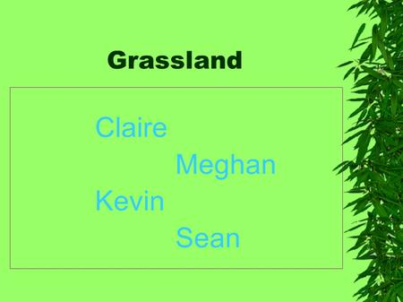 Grassland Claire Meghan Kevin Sean. Grassland plants Grassland plants: Indian grass switch grass prairie cord grass Canada wild rye big blue stream Three.