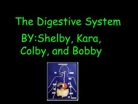 The Digestive System BY:Shelby, Kara, Colby, and Bobby.