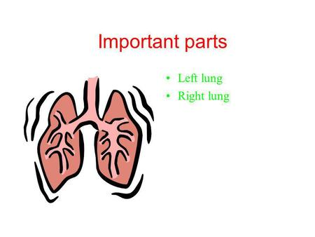 Important parts Left lung Right lung How it can be damaged One of the worst things for your lungs is smoking. Smoking is a bad habit for your lungs.