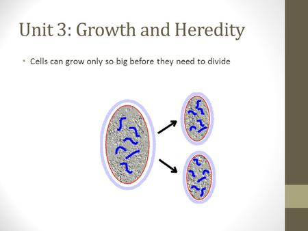 Unit 3: Growth and Heredity Cells can grow only so big before they need to divide.