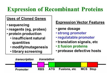 Uses of Cloned Genes sequencing reagents (eg, probes) protein production insufficient natural quantities modify/mutagenesis library screening Expression.