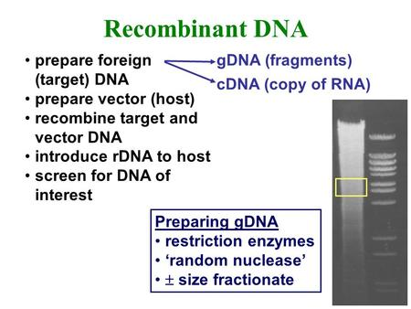 Prepare foreign (target) DNA prepare vector (host) recombine target and vector DNA introduce rDNA to host screen for DNA of interest Recombinant DNA gDNA.