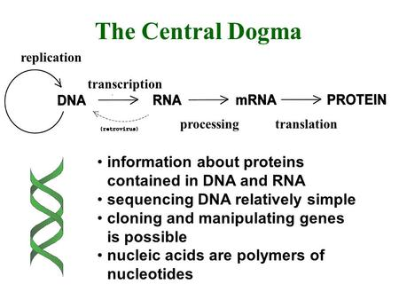 Replication transcription processingtranslation The Central Dogma information about proteins contained in DNA and RNA sequencing DNA relatively simple.