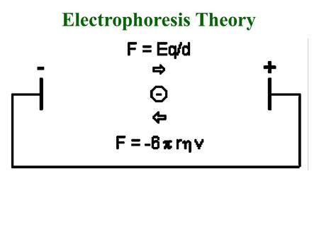 Electrophoresis Theory. v = (E/d)(q)/(6 r ) mobility electric field strength net charge shape viscosity size mobility = (applied voltage)(net charge)