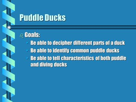 Puddle Ducks b Goals: Be able to decipher different parts of a duckBe able to decipher different parts of a duck Be able to identify common puddle ducksBe.