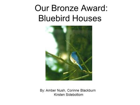 Our Bronze Award: Bluebird Houses By: Amber Nush, Corinne Blackburn Kirsten Sidebottom.