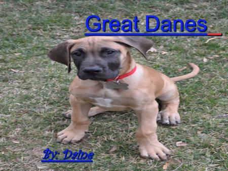 Great Danes By: Daine About Great Danes Great Danes are Giant and powerful dog. Great Danes are loyal to their owners. Great Danes are Giant and powerful.