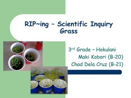 RIP~ing – Scientific Inquiry Grass 3 rd Grade – Hokulani Maki Kobori (B-20) Chad Dela Cruz (B-21)