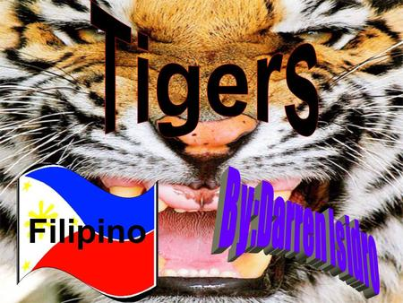 Tigers Filipino By:Darren Isidro.