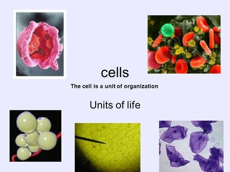 Cells Units of life The cell is a unit of organization.