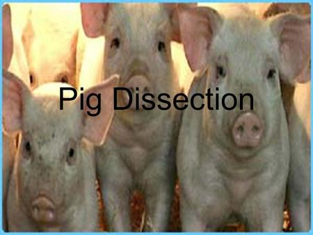 Pig Dissection.  hael.Gregory/files/Bio%20102/Bio%20102 %20Laboratory/Fetal%20Pig/Fetal%20Pig. htm.