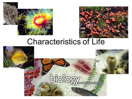 Characteristics of Life. Characteristics of Living Things Anything that possesses all of the characteristics of life is known as an organism.