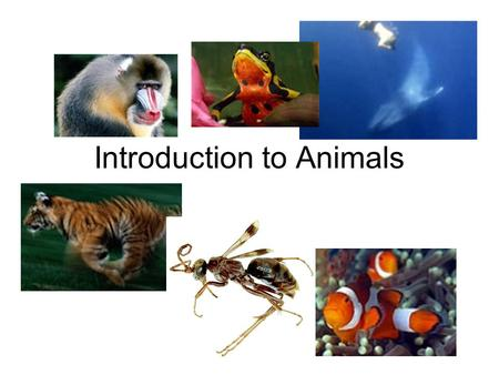 Introduction to Animals. Over a million different types have been identified! Animals likely evolved from protozoans. Kingdom Protista.