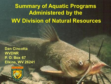 Summary of Aquatic Programs Administered by the WV Division of Natural Resources Dan Cincotta WVDNR P. O. Box 67 Elkins, WV 26241.