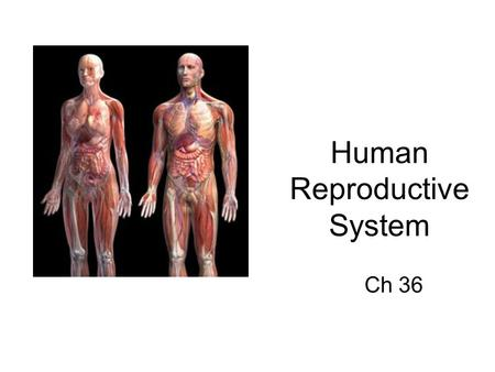Human Reproductive System Ch 36. SC.912.L.16.13 Describe the basic anatomy and physiology of the human reproductive system.