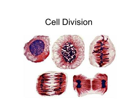 Cell Division. 4 day old mouse cells Section 1 Vocabulary 1. Cell cycle 2. Interphase 3. Mitosis 4. Cytokinesis 5. Chromosome 6. Chromatin.