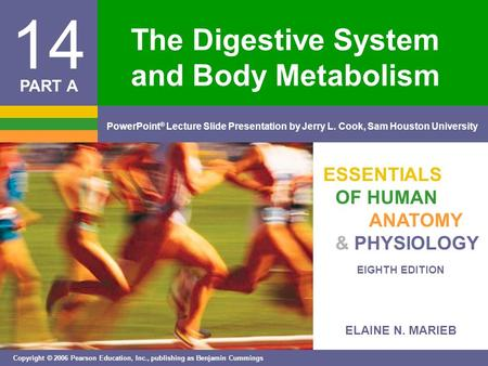 ELAINE N. MARIEB EIGHTH EDITION 14 Copyright © 2006 Pearson Education, Inc., publishing as Benjamin Cummings PowerPoint ® Lecture Slide Presentation by.