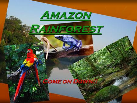 Amazon Rainforest Come on Down!!. Plants and animals of the Amazon The wildlife population of the Amazon is very diverse. You can find anything from a.