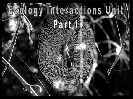 The Ecology: Interactions Unit The Ecology: Interactions Unit Everything is connected to each other. Everything is connected to each other.