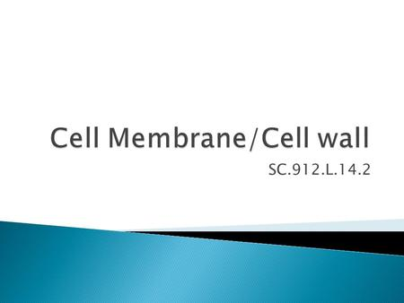 SC.912.L.14.2. How does something as thin as a cell wall or membrane protect a cell?