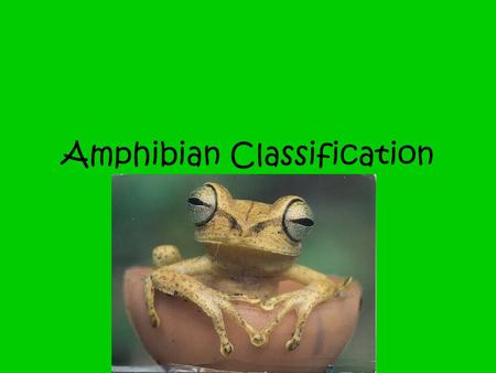 Amphibian Classification. Amphibian Classification Notes Amphibians occur on all continents except Antarctica. There are about 4000 living species of.