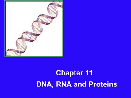 Chapter 11 DNA, RNA and Proteins.