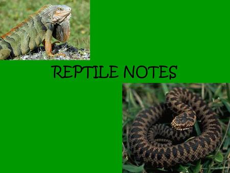 REPTILE NOTES. REPTILES The lifestyles of most reptiles have major adaptations for living on land. For example, the chuckwalla, which is a lizard.