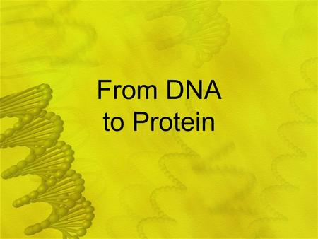 From DNA to Protein.