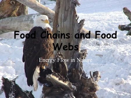 Food Chains and Food Webs Energy Flow in Nature. Energy Roles An organisms energy role in an ecosystem may be that of a producer, consumer, or decomposer.