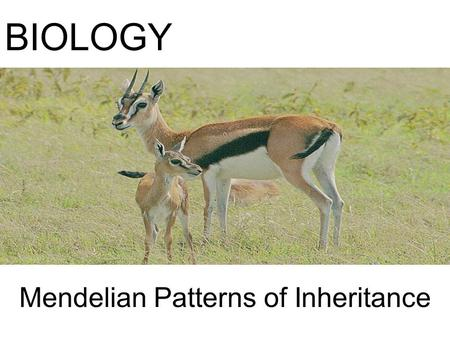 Mendelian Patterns of Inheritance BIOLOGY. Gregor Mendel (1822-1884) Austrian monk who formulated fundamental laws of heredity in early 1860s. –Studied.