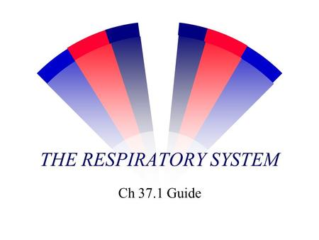 THE RESPIRATORY SYSTEM Ch 37.1 Guide Breathing:Mechanical intake gas Diaphram muscle expands & contracts the chest cavity.