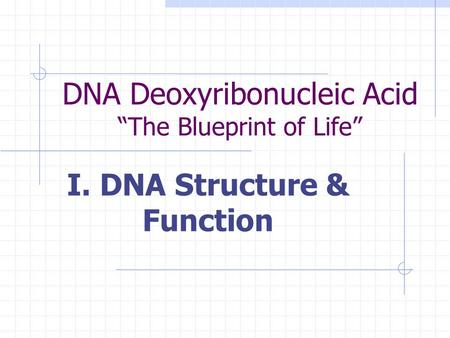 DNA Deoxyribonucleic Acid The Blueprint of Life I. DNA Structure & Function.