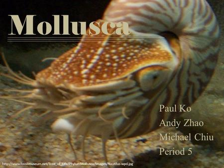 Mollusca Paul Ko Andy Zhao Michael Chiu Period 5
