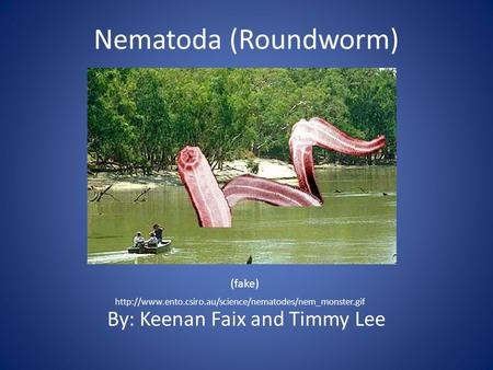 Nematoda (Roundworm) By: Keenan Faix and Timmy Lee  (fake)