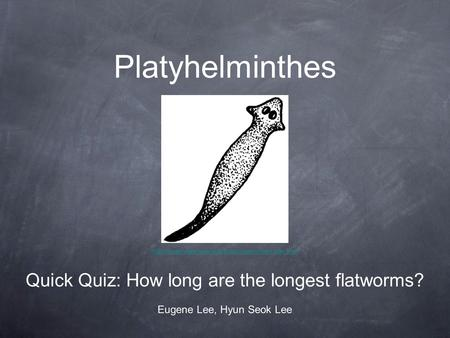 Platyhelminthes Quick Quiz: How long are the longest flatworms? Eugene Lee, Hyun Seok Lee.