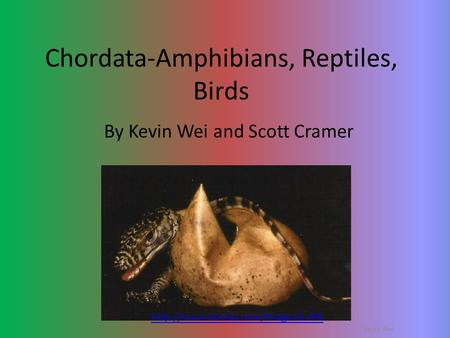 Chordata-Amphibians, Reptiles, Birds By Kevin Wei and Scott Cramer  Kevin Wei.