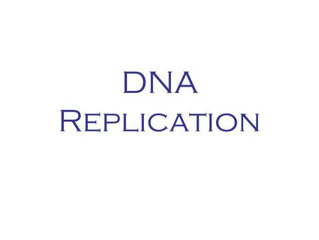 DNA Replication. Base pairing G A C T A G A T C T G A T C T A.