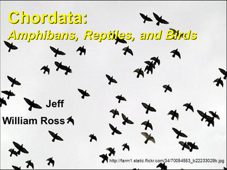 Chordata: Amphibans, Reptiles, and Birds  William Ross Jeff.
